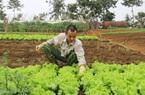 Sơn La: Nguồn cung rau xanh dồi dào đáp ứng nhu cầu dịp Tết Nguyên Đán