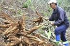 Loại nông sản gì bất ngờ được Trung Quốc tăng tốc thu mua, khối lượng xuất khẩu tăng 97%?