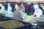 3 thị trường lớn nhất nhập khẩu điều Việt Nam