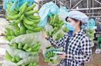 Trái cây rầm rộ xuất ngoại, thị trường Trung Quốc tăng vọt
