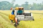 """Vụ Đông Xuân 2020-2021: Dịch vụ cho thuê máy gặt đập liên hợp """"ăn nên làm ra"""""""