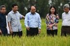 Thủ tướng Nguyễn Xuân Phúc sẽ chủ trì hội nghị sơ kết 3 năm thực hiện Nghị quyết 120 tại Cần Thơ