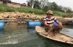 """Phú Thọ: Cao thủ săn loài """"sát thủ"""" cá râu dài da trơn tuột, ngạnh sắc nhọn trên Đà giang"""