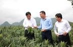 5 năm tái cơ cấu nông nghiệp, Thứ trưởng Bộ NNPTNT Lê Quốc Doanh: Kỳ tích gọi tên hạt lúa, quả chanh