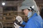 Lần đầu tiên tại Việt Nam: Lợn Ỉ tưởng bị tuyệt chủng nay được nhân bản thành công từ tế bào soma mô tai