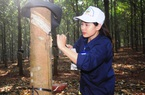 Trung Quốc tăng sản xuất lốp sau khi bán 2,5 triệu chiếc ô tô, xuất khẩu loại nông sản này của Việt Nam tăng 89,9%