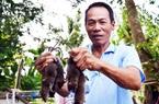 ĐBSCL: Nông dân dùng cách gì để diệt chuột bách phát bách trúng?