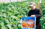Nhật Bản sửa luật để thúc đẩy xuất khẩu nông sản