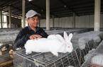 Lâm Đồng: 9X bỏ lương 40 triệu về quê nuôi 3.000 con gì ham ăn rau cỏ mà lãi hơn 1 tỷ đồng mỗi năm?