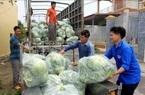 Thái Bình: Đến khổ, bán 3 cái bắp cải to ú ụ chưa mua nổi gói mì tôm, nông dân mong muốn điều này
