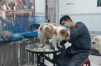 Phú Yên: Lấy ráy tai, cắt móng, mát xa cho những loài thú này mà kiếm bộn tiền
