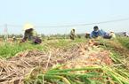 Covid-19 ở Hải Dương: Nông dân chờ đợi thời khắc được làm ruộng mà không cần đem theo thẻ ra đồng