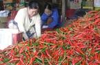 Trung Quốc bất ngờ mua nhiều ớt chỉ thiên của Việt Nam, giá ớt có nơi lên 90.000 đồng/kg