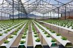 5 lưu ý về vay thế chấp đất nông nghiệp