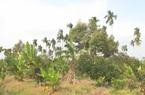 Cần Thơ: Mô hình cho hiệu quả kinh tế cao, lão nông này trồng nhiều loại cây ăn trái và vật nuôi gì?