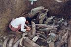"""Một nông dân đào mương bất ngờ phát hiện ổ cổ vật ngọc bích chứa """"Kỳ quan thứ 9 thế giới"""""""