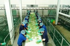 Mục tiêu đến năm 2030: Giá trị kim ngạch xuất khẩu rau quả Việt Nam đạt 8 - 10 tỷ USD