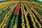 Hạn mức mua bán đất nông nghiệp năm 2021 là bao nhiêu?