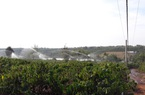 Gia Lai: Có nguồn điện ổn định, nông dân Chư Sê chủ động bơm tưới cà phê