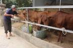 Xây dựng NTM ở Điện Biên: Bảo vệ môi trường, đồng hành cùng chăn nuôi