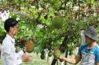 Agribank Cam Lâm tiếp nguồn vốn ưu đãi cho nông dân