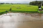 Mất ruộng do thi công QL1, nông dân Bình Định chưa được Bộ GTVT bồi thường