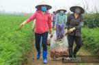 Hải Dương: Thương lái tấp nập về Chí Linh mua nông sản, gà đồi, vẫn còn 800 tấn cá chờ người bắt