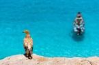 Đảo Socotra - hòn đảo sở hữu hệ sinh thái đặc biệt nhất Trái đất