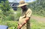 """Đồng Nai: Chàng trai """"bỏ"""" phố về quê trồng chanh, chỉ vặt lá bán cũng thu tiền tỷ"""