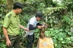 Bình Định: Thả cu li, khỉ quý hiếm…. về rừng tự nhiên