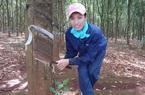Trung Quốc gom gần hết loại nông sản xuất khẩu này của Việt Nam chỉ để phục vụ một ngành
