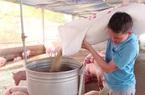 Giá lợn hơi tuột dốc, giá cám tăng cao ngất ngưởng: Nhà nông đứng ngồi không yên