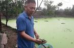 Thái Nguyên: Ông công an về hưu, rảnh rỗi nuôi con chỉ ăn bèo, tưởng nuôi cho vui ai dè kiếm bộn tiền