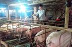 Hơn 10 năm nuôi lợn, có lúc thua liểng xiểng, cuối cùng ông nông dân cũng thành tỷ phú, được Thủ tướng tặng Bằng khen