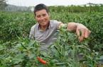 Trung Quốc gom 62% rau quả xuất khẩu của Việt Nam, sao lại xuất hiện văn bản giả mạo Hải quan Trung Quốc?