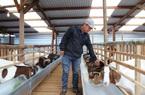 Vừa nuôi thỏ, vừa nuôi dê, 9X này thu nhập tiền tỷ mỗi năm