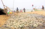 Clip - Ảnh: Ngư dân (Hà Tĩnh) trúng đậm mùa cá trích, kiếm tiền triệu mỗi ngày