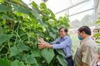 An Giang: Trên đặt pin năng lượng mặt trời, dưới trồng rau quả, vườn của nông dân Khmer đẹp như phim, lợi nhuận kép