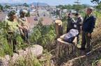 """Video: Xót xa cảnh rừng thông cổ thụ giữa trung tâm Đà Lạt bị """"sát hại"""""""