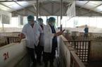 """Mô hình nuôi lợn cho thu nhập """"khủng"""" hơn 10 tỷ một năm ở Lào Cai được Chủ tịch Hội Nông dân VN khen ngợi"""