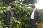 Agribank Đăk Lăk: Kiên định mục tiêu vì tam nông