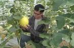 """Nghệ An: Trai 9X đưa cả """"thế giới"""" công nghệ cao Israel về vườn nhà, trồng ra quả bí trắng Mỹ to khổng lồ"""