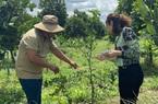 Đồng Nai: Cận cảnh vườn chanh Thái trồng chỉ để bán lá thu tiền tỷ của anh nông dân họ Lê