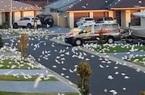 """""""Khải huyền của loài chim"""" – hàng vạn con vẹt bay rợp trời khiến người dân hoảng sợ"""