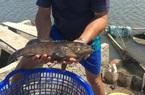 """Chỉ nuôi """"độc"""" một loài cá đặc sản gì trong ao nước mặn mà ông nông dân tỉnh Bà Rịa-Vũng Tàu """"bỏ túi"""" nửa tỷ/năm?"""
