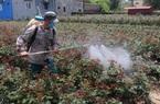 Ảnh: Nhiều nông dân trồng hoa ở Mê Linh chỉ cần làm giờ hành chính, mỗi năm thu nhập vài trăm triệu