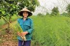 """Clip: Nông dân Nghệ An trồng giống rau """"hoàng đế"""", cứ sáng ra cầm chắc 1 triệu đồng"""