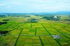 Sử dụng đất ổn định có phải nộp tiền sử dụng đất khi làm Sổ đỏ?