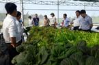 Quảng Nam: TP.Tam Kỳ đạt chuẩn Nông thôn mới, người dân có thu nhập hơn 2.000 USD/năm