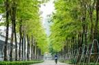 Điểm qua những tuyến đường nhiều tầng cây xanh mướt ở Hà Nội